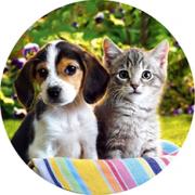 Animal/Pets